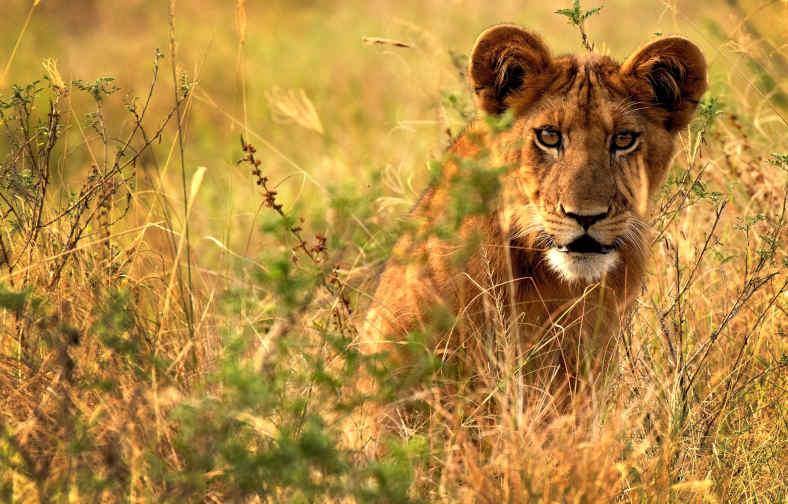 Safariskies.com